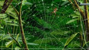 WEAVING YOUR WEB PART 1: THE ECOLOGY OF NETWORKING AND REFERRALS